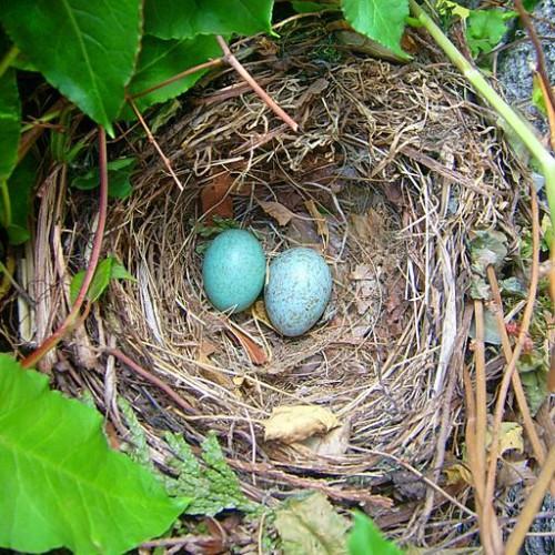 Ei mal 1: von der Eizelle zum Ei
