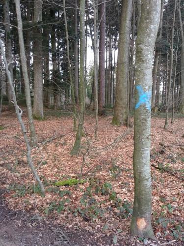 Baum-Graffitis