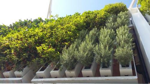 Pflanzen in der Vertikalen