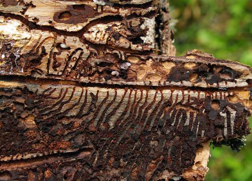 Käfer gegen Baum