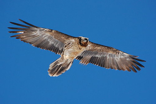 Ein extremer Vogel