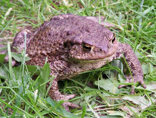 Froschwetter – Krötenfragen
